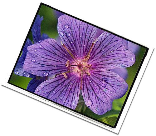 Purpleflower2