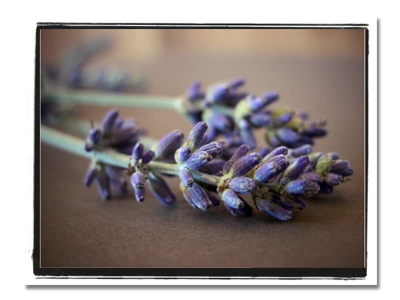 Lavender copy border